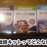 きのこ栽培キット(シイタケ、キクラゲ、しめじ)を徹底レビュー!!